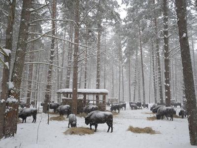 Экскурсия по парку «Орловское полесье»