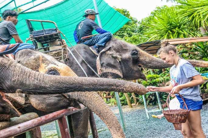 Живой Самуи — тур на семейную эко-ферму слонов