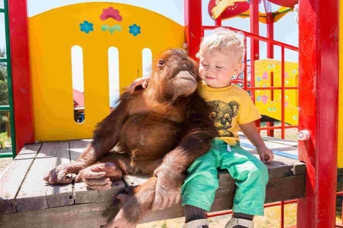 Геленджик: «Сафари-парк»