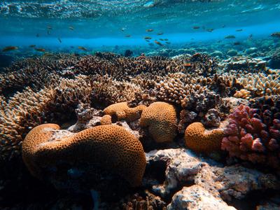 Шарм-эль-Нага — купание в коралловой бухте