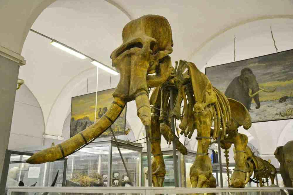 Фотография Зоологического музея