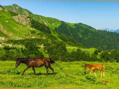 Альпийские луга Абхазии из Нового Афона