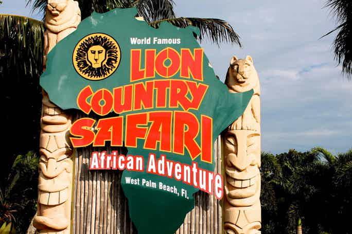 Львиное сафари (Lion Country Safari)