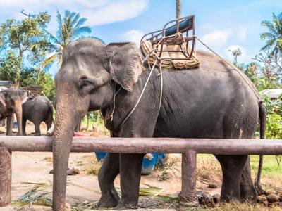 Эко-тур «В мире тайской природы»