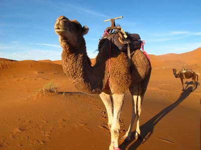 Ночное путешествие в Загору через пустыню Сахара из Уарзазата