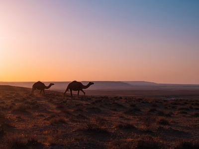 Восход солца в пустыне