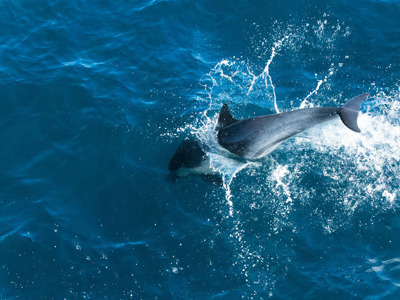 Наблюдение за дельфинами на судне со стеклянным дном