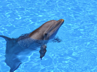 Плавание с дельфинами в Хургаде