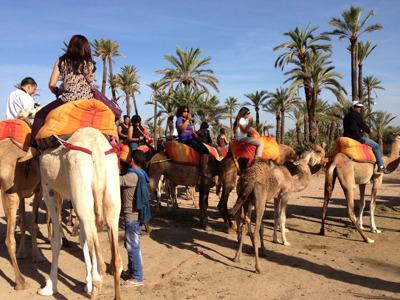 Марракеш: Поездка на верблюде по пальмовой роще с перерывом на чай