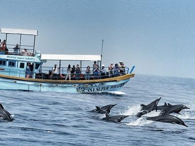 Наблюдение китов, дельфинов и черепах, форт Галле из Мириссы