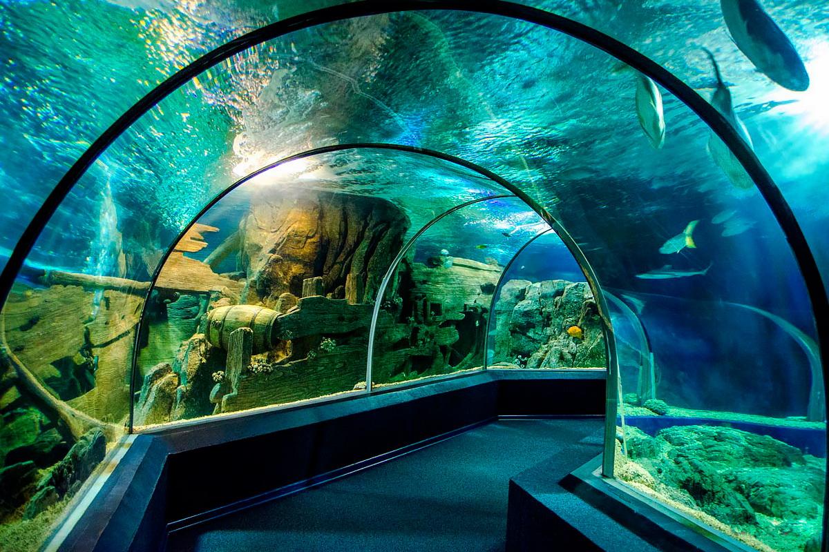 Океанариум Sochi Discovery World Aquarium фото