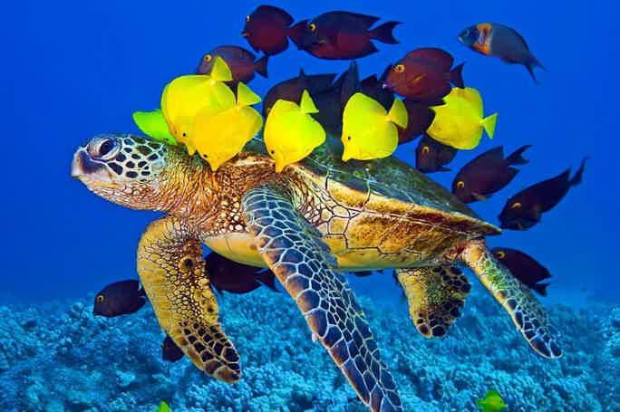 Путешествие в подводный мир Красного моря