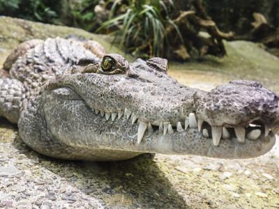 Шоу крокодилов в Шарм эль Шейхе