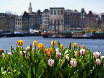 Онлайн-экскурсия «Амстердам в сезон тюльпанов»