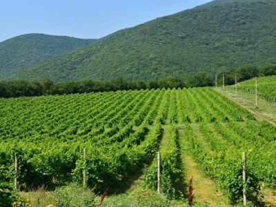 Винный тур в Абрау-Дюрсо с дегустацией шампанского