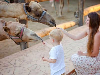 Экскурсия-приключение «В мире животных»