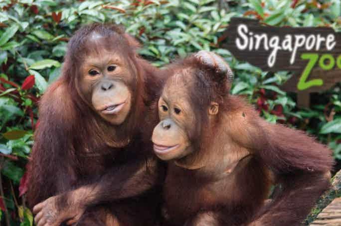 Входной билет в зоопарк Сингапура