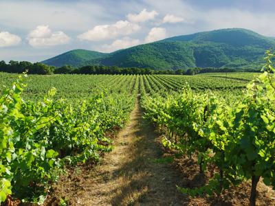 Прогулка по виноградникам Абрау-Дюрсо