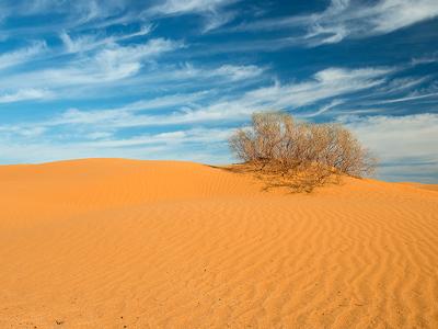 Бархан Большой брат: Путешествие в астраханскую пустыню