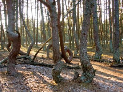 Куршская коса: танцующий лес и песчаные дюны
