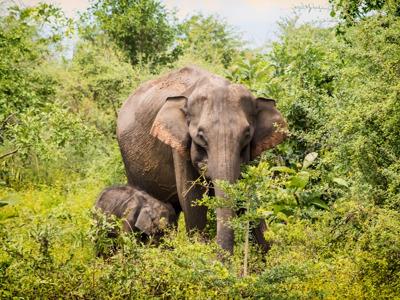 Экскурсия в Национальный парк Удавалаве