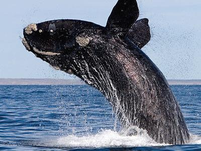 Китовое сафари (сезонная экскурсия)