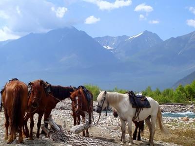 Конная прогулка вдоль озера Байкал