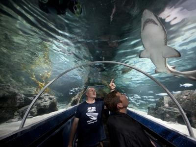 29. Экскурсия в подводный мир антарктического центра Келли Тэрлтон. Окленд.
