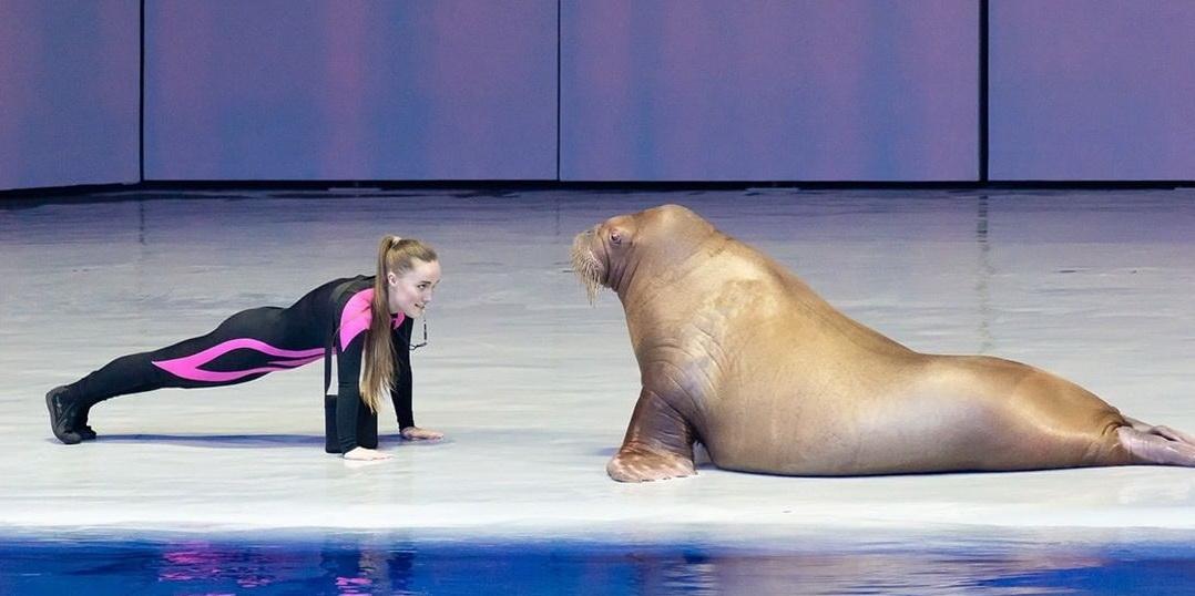 Девушка и морж