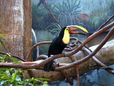 Бронкс с посещением Зоопарка и Ботанического Сада